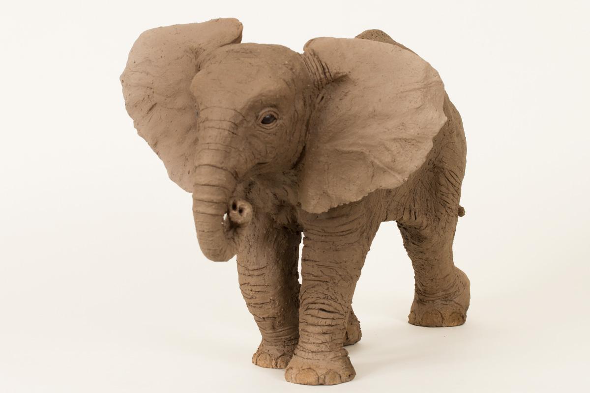 African Elephant Calf Bill Prickett