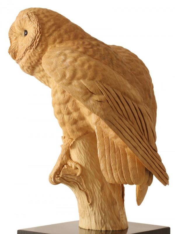 Barn Owl, Lime Wood