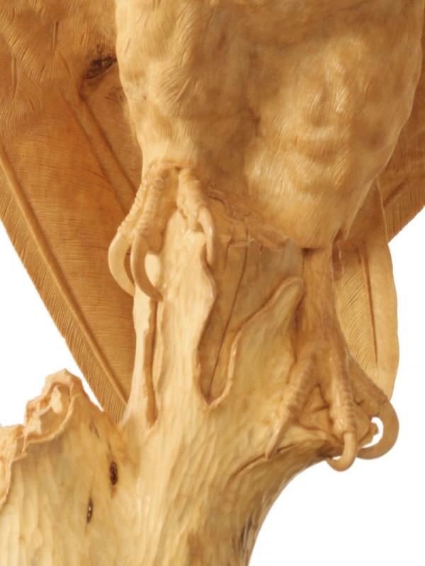 Barn Owl Feet