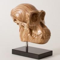 Chimp Skull