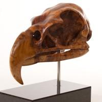 Harpy Eagle Skull