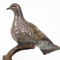 Turtle Dove Bronze