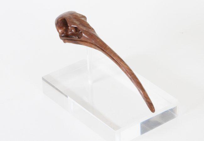 Ibis Skull
